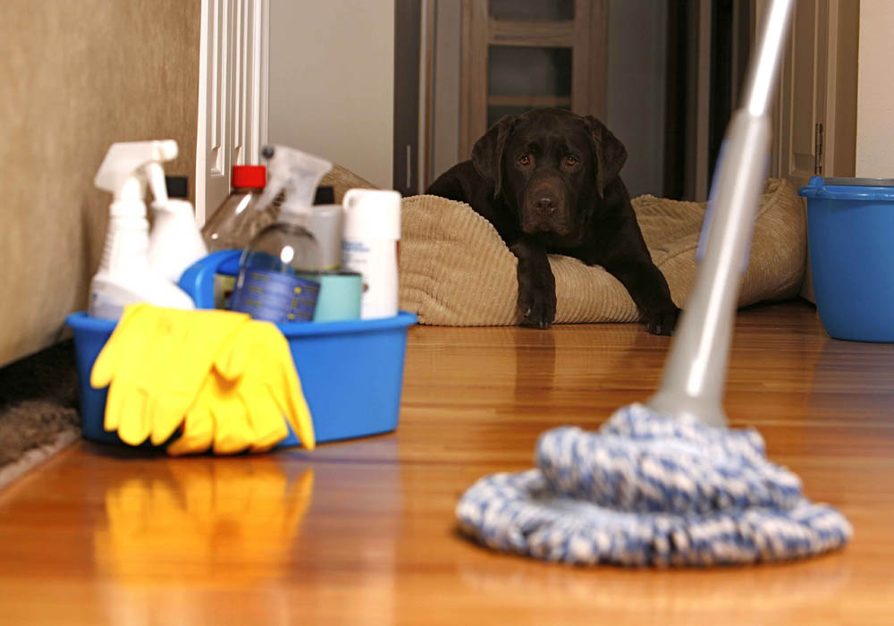 tips to hiring a house cleaning service mississippi cleaning
